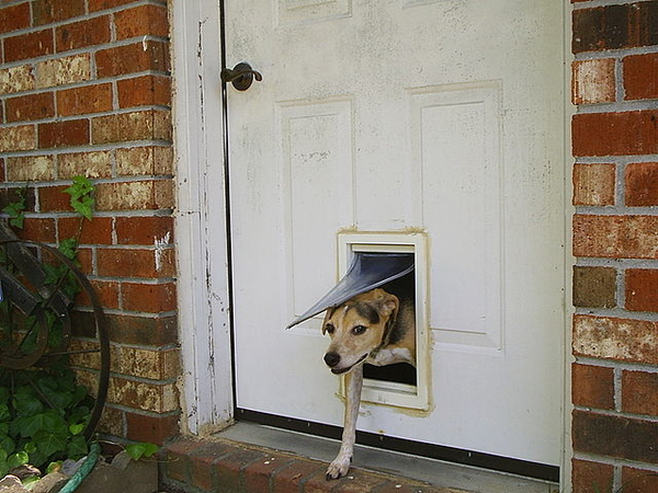 doggy_door
