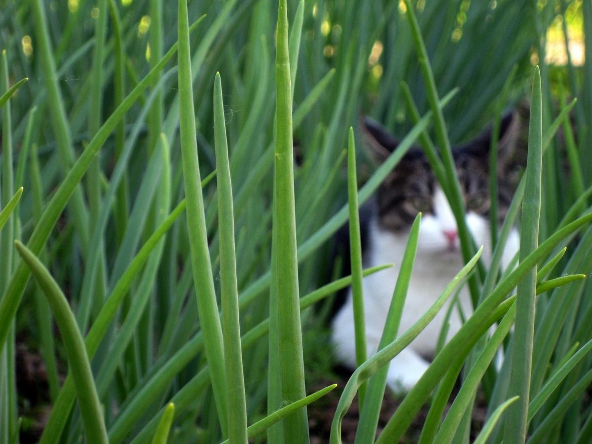 cat_hidden_grass_green