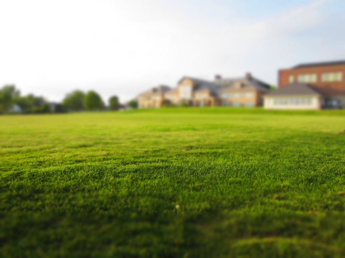 lawn_grass_mowing_green