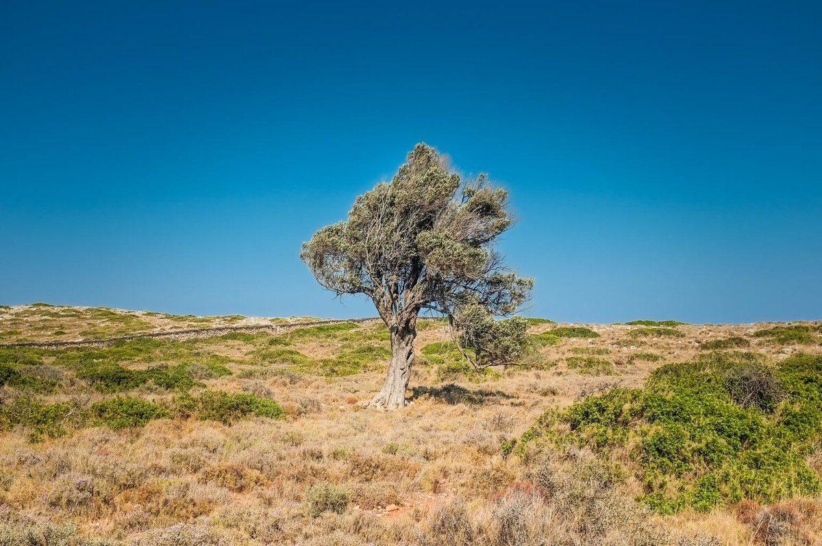 tree_arid_desert_solo