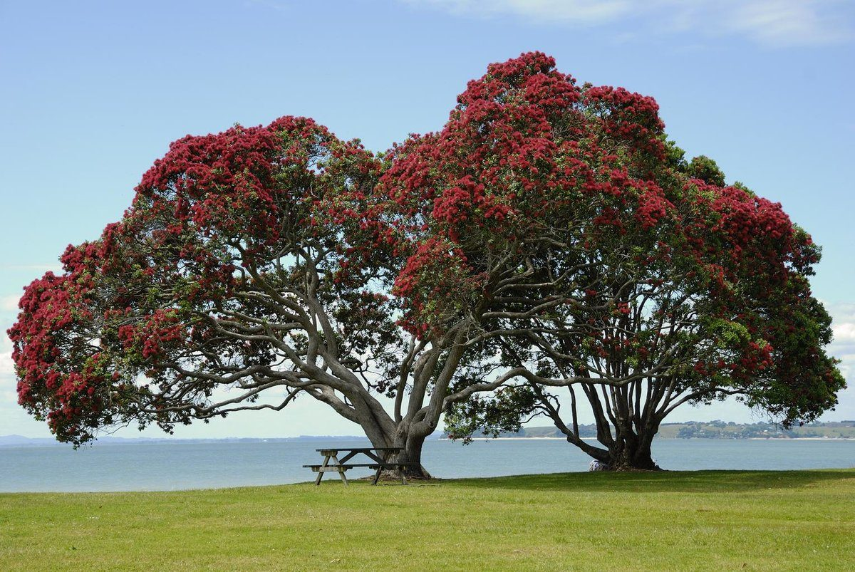 tree_blossom_bloom_red