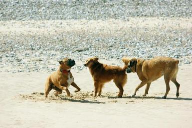 dogs_playing_on_beach