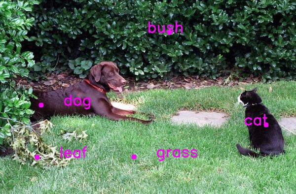 cat_dog_annotated