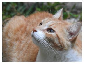 4-cat-photo