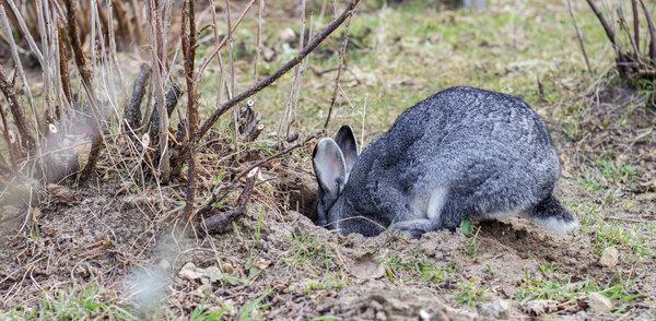 rabbit-holes-resized