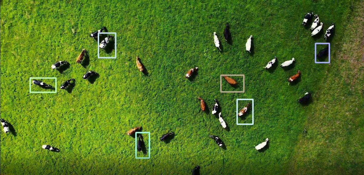 cow-tracking